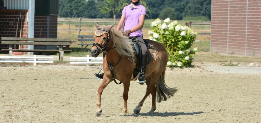 Das Pferd ist nicht in Anlehnung und kommt aus der Balance