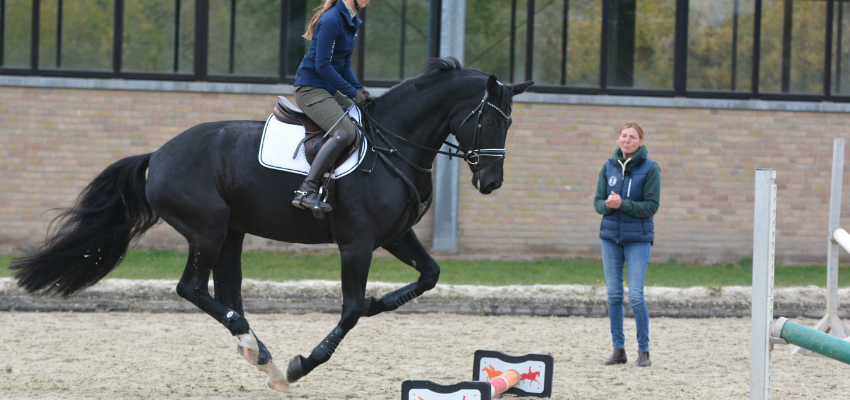 Über Cavaletti kann man dem Pferd auch den fliegenden Wechsel beibringen