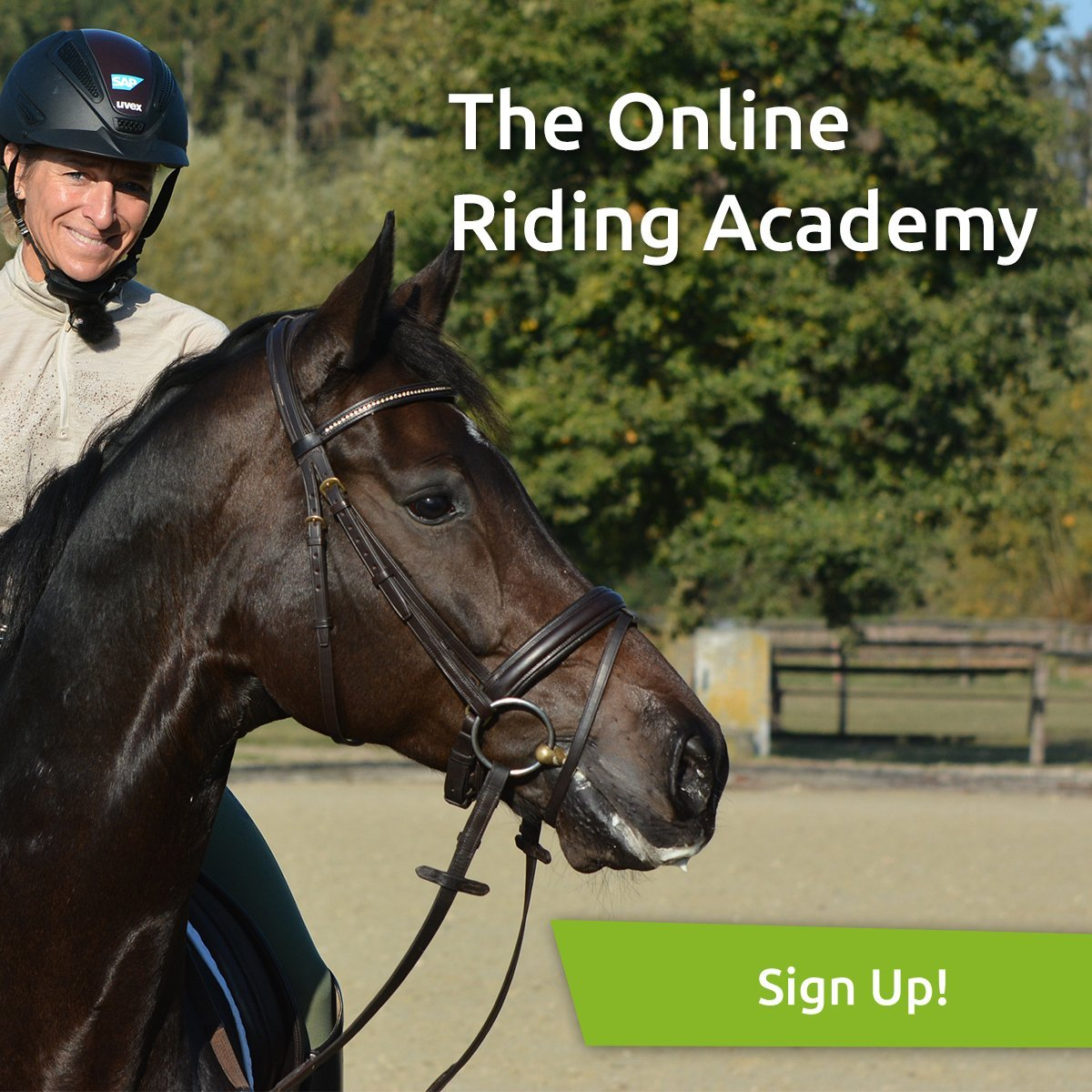 wehorse sign up
