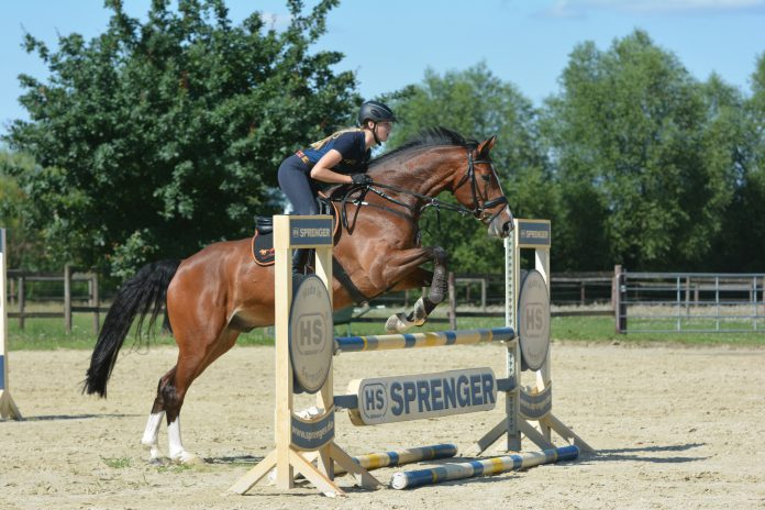 jumping-exercise-horse