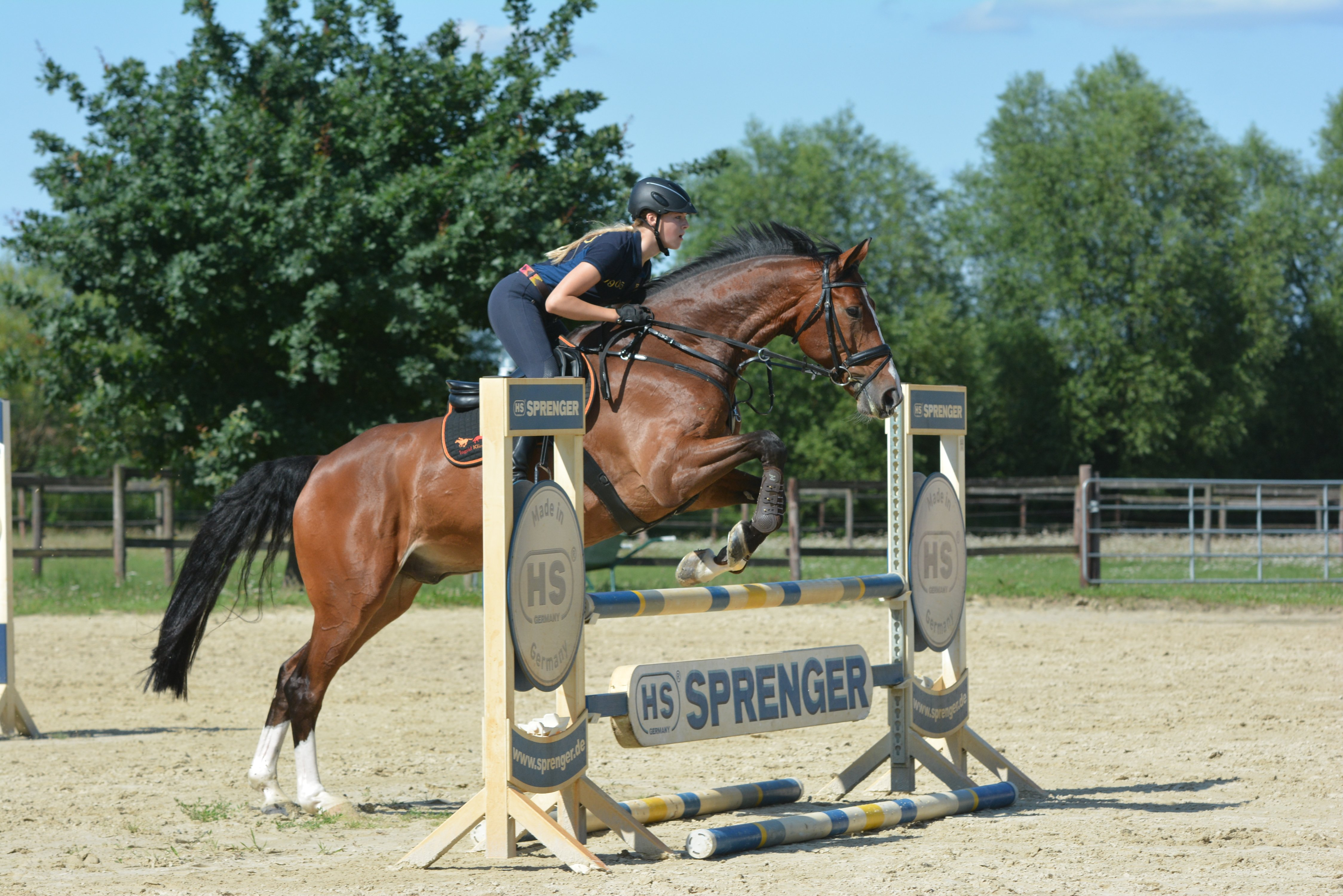 Ready For Showjumping Those Jumping Exercises Are Great For Your Horse