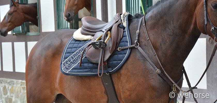 saddle-pad-horse