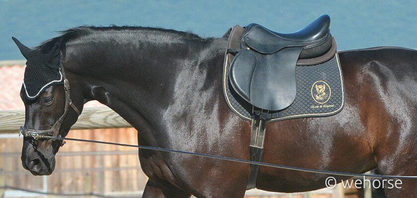 saddle-pad-lunging