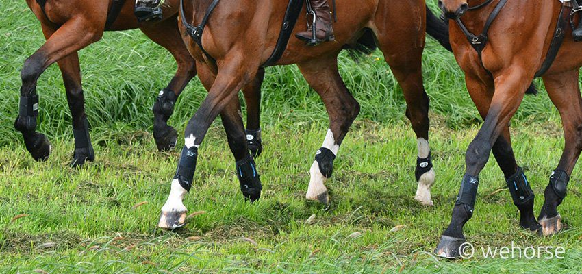 horses-leg-protection-boots