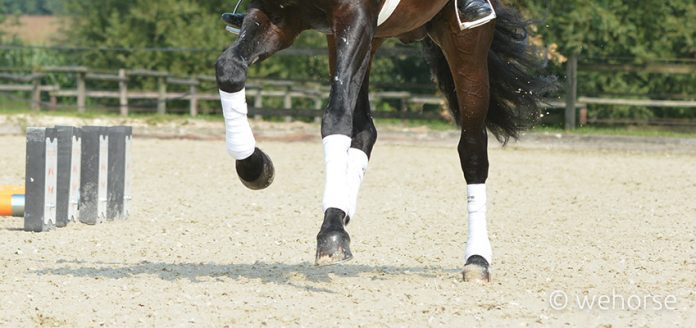 leg-protection-horse-bandages