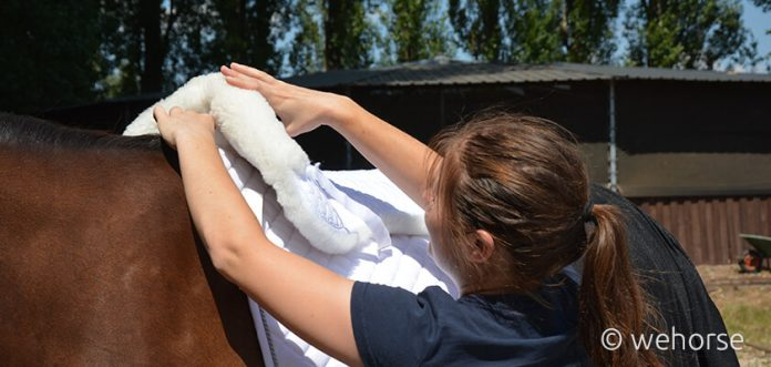 saddle-pads-horse