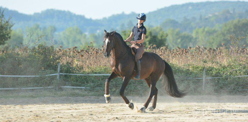 alizée-froment-bitless-riding-mistral