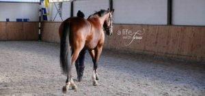 training-horses-motivation