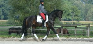 dressage-impulsion-ingrid-klimke