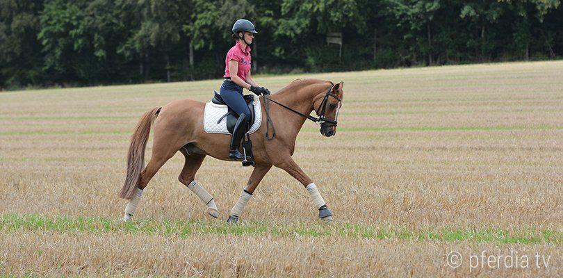 horse-impulsion-dressage