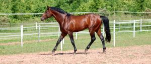 horse-walk-field