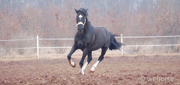 horse-winter-training