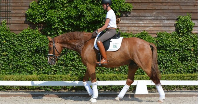 forward-down-dressage-training
