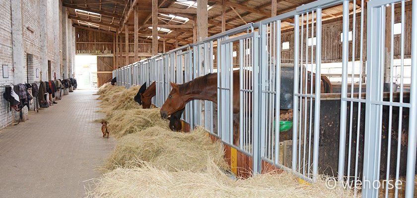 horse-caring-winter-feeding