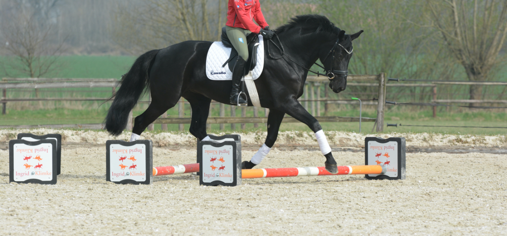 impulsion-dressage-horse-cavaletti