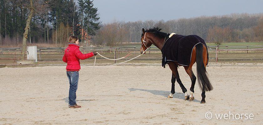 training-horse-warm-up-winter