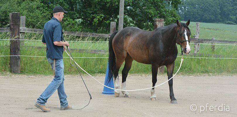 lunging-horses-peer-claßen