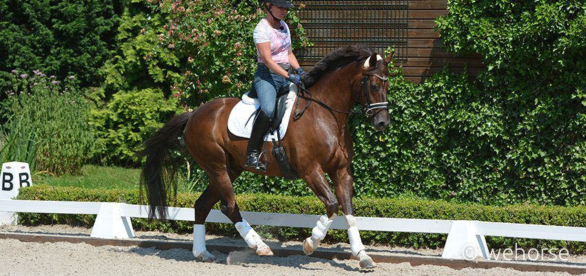 britta-schöffmann-riding-horse-with-leg-protection