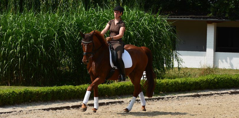 dressage-training