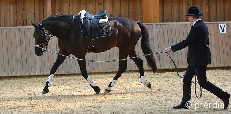 lunging-horses-philippe-karl