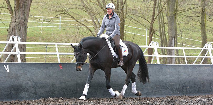 stretching-posture-dressage-training