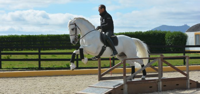 working-equitation-obstacle