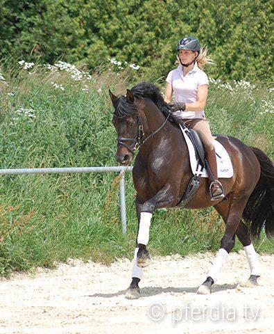 horse-canter-dressage