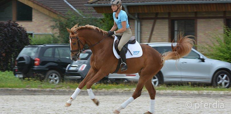 ingrid-bucking-horse