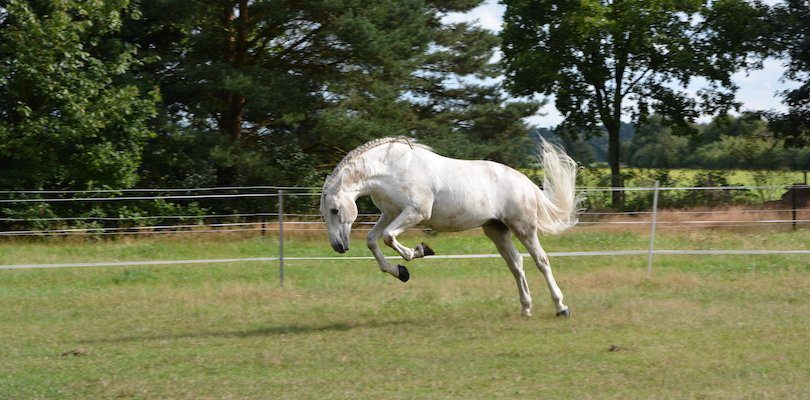 free-bucking-horse