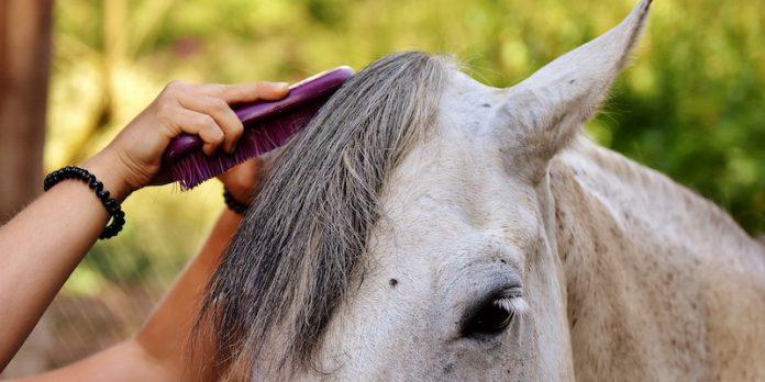 grooming-horses