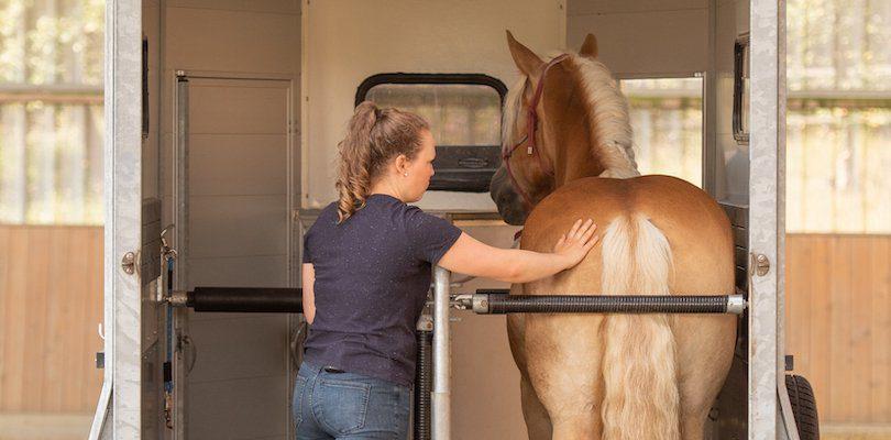 loading-horses-confidence