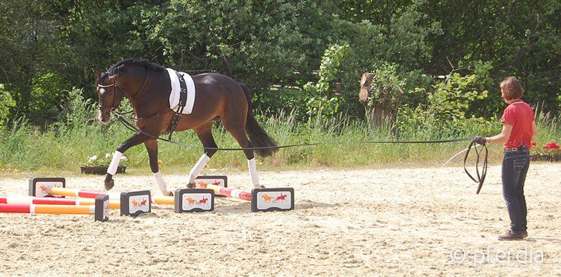 Ingrid-Klimke-lunging-horses