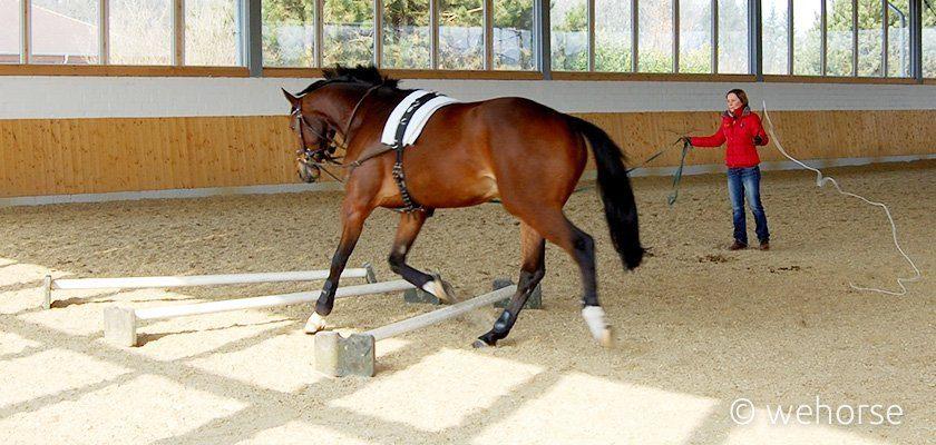 Cavaletti lunging training - Ingrid Klimke