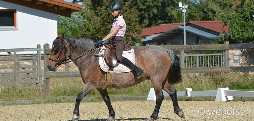 equestrian-fitness-saddle-exercise