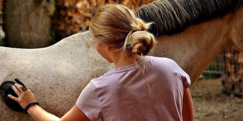 grooming-horse-brushing
