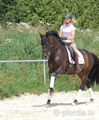horse-canter-dressage