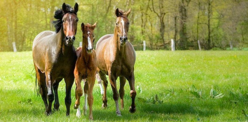 horse-gaits-field
