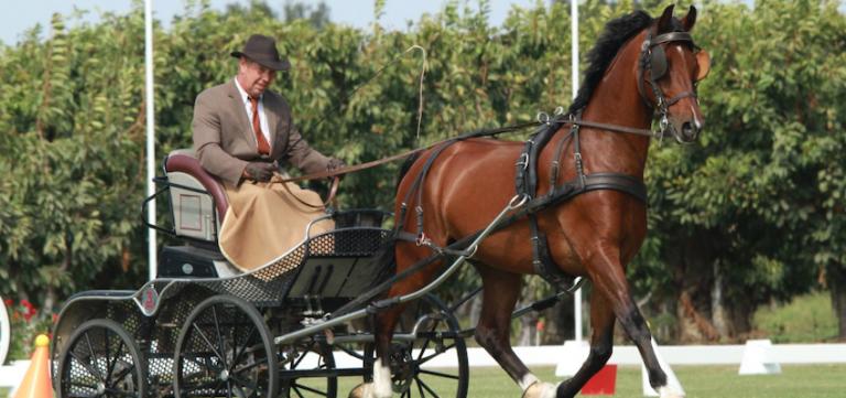 driving-horses