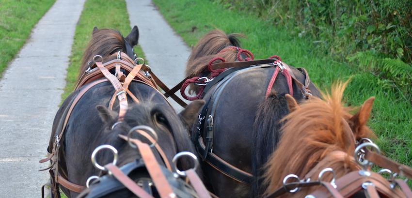 driving-horses-road