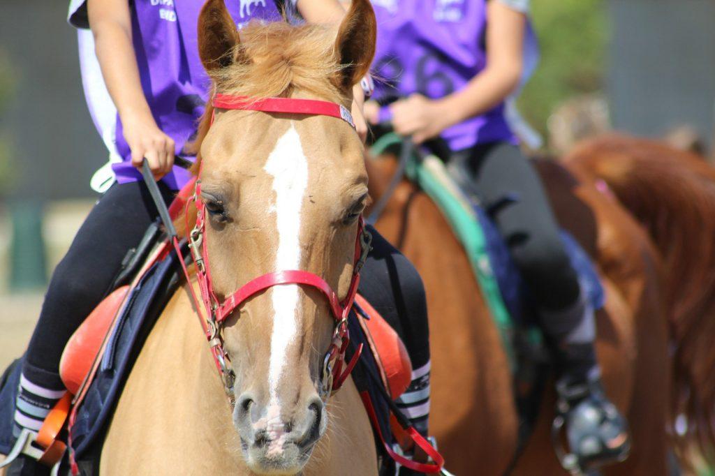 endurance-horse-bridle
