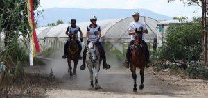 endurance-horses