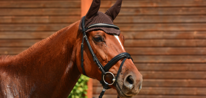 horse-english-bridle
