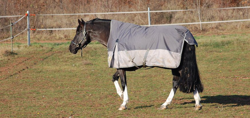 horse-fit-blanket