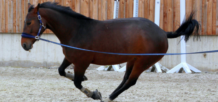 lunging-bucking-horse