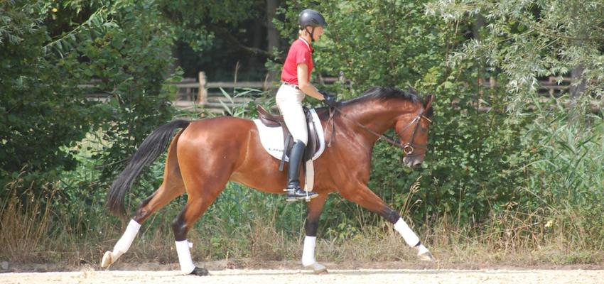 rider-light-seat