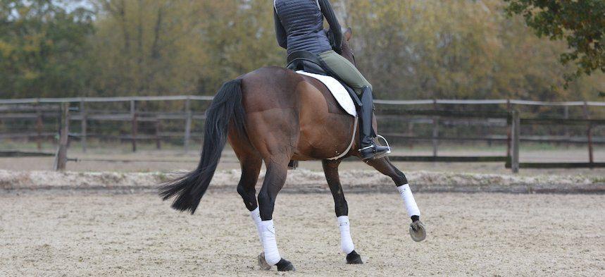 bending-horse-ingrid