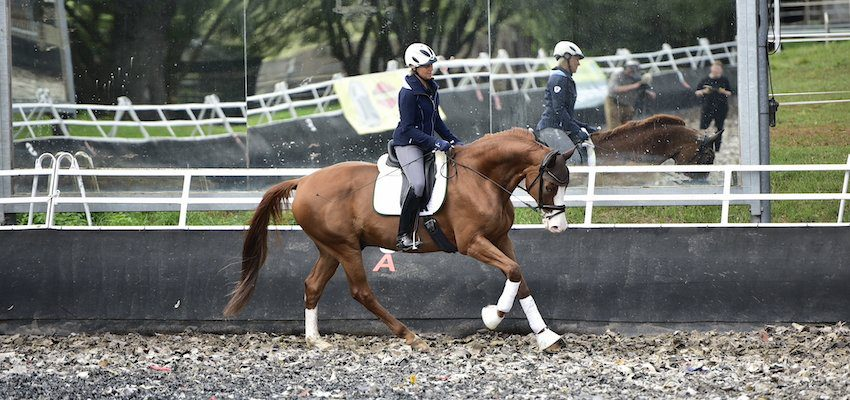 bending-horse-uta