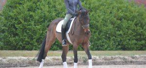 front-bending-horse-ingrid