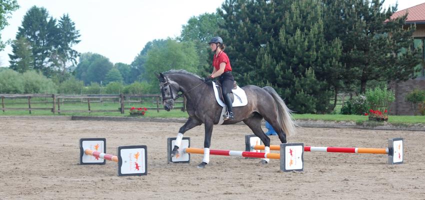 horse-canter-cavaletti