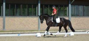 horse-canter-ingrid